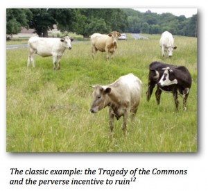 Cows_Commons