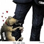 Media Lap Dog