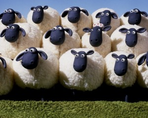 sheeple-sheep-shepherd