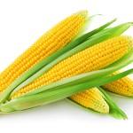 Corn GMO Food